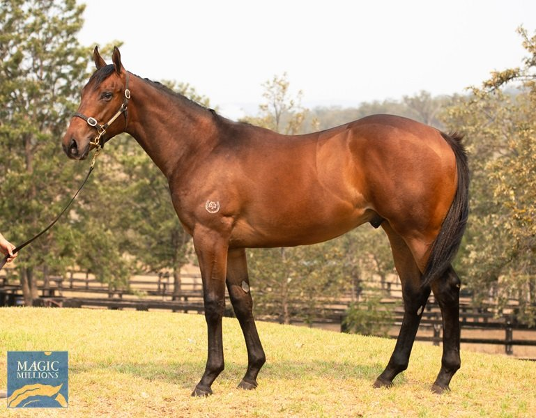 Boomer finds value at Magic Millions Yearling Sale 2020