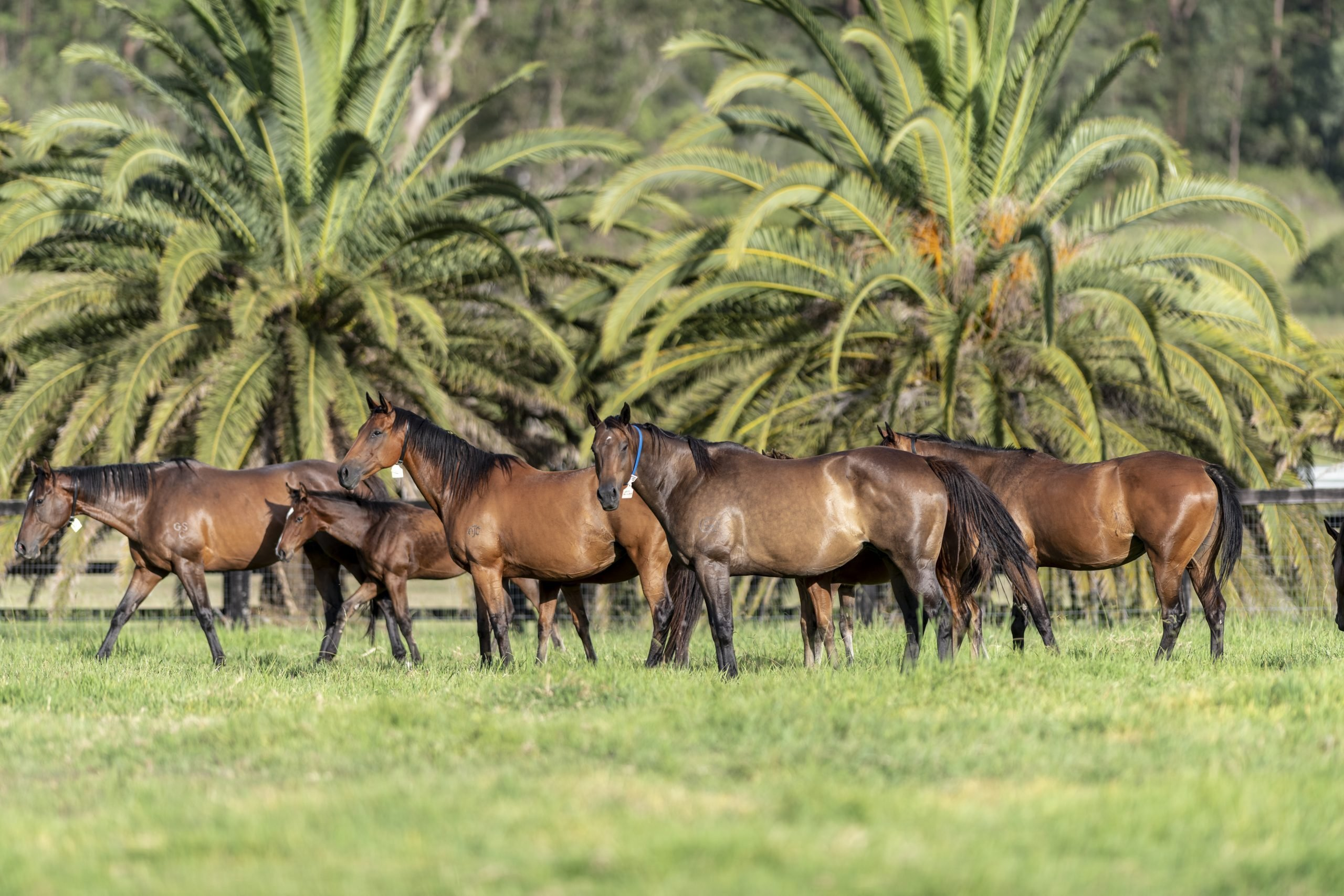 What business opportunities are available in the breeding industry?