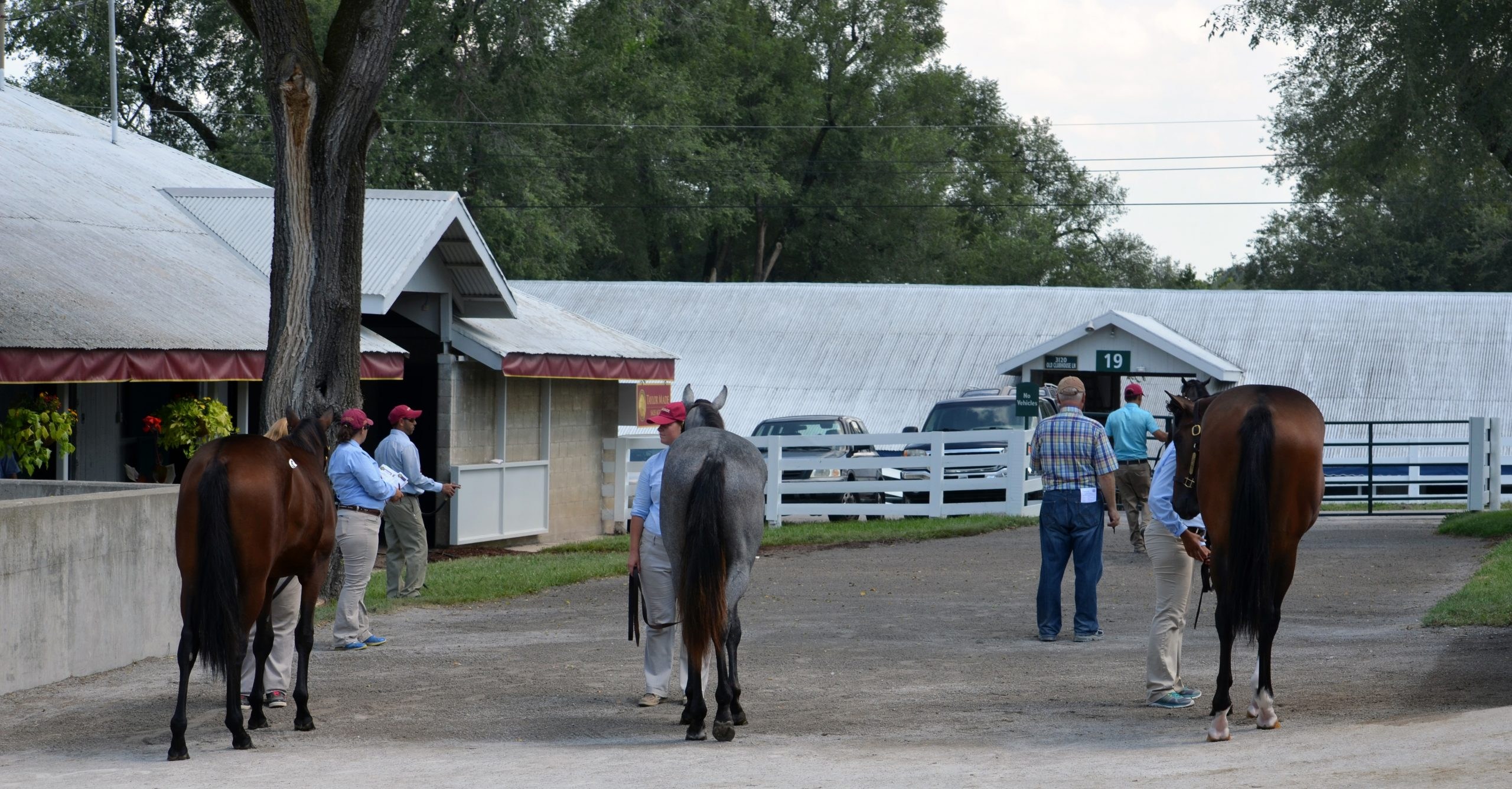 Should I buy through a Bloodstock Agent or Syndicator?