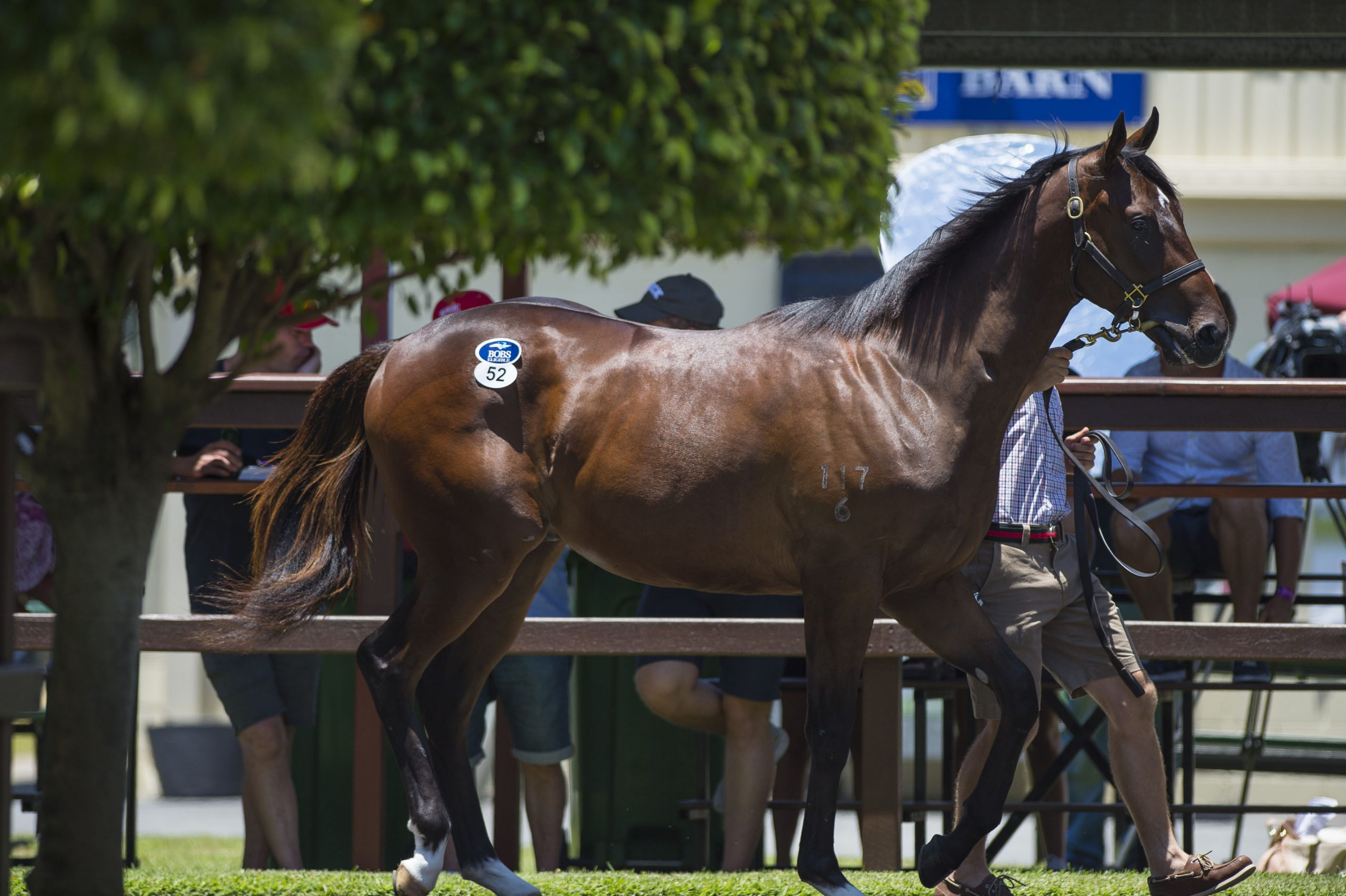 6 Steps to Purchasing a Magic Millions Yearling